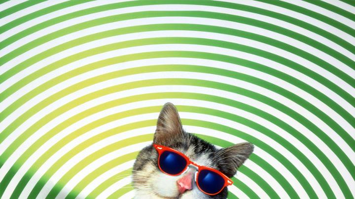 09:10 Sasodītais kaķis