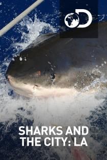 Sharks And The City: LA